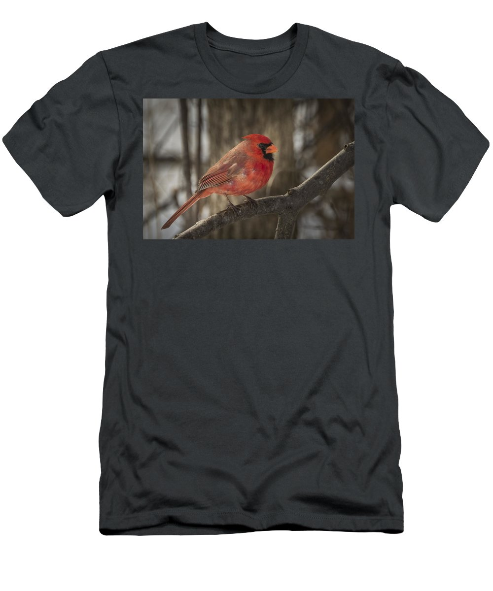 Northern Cardinal Men's T-Shirt (Athletic Fit) featuring the photograph Cardinal by David Hook