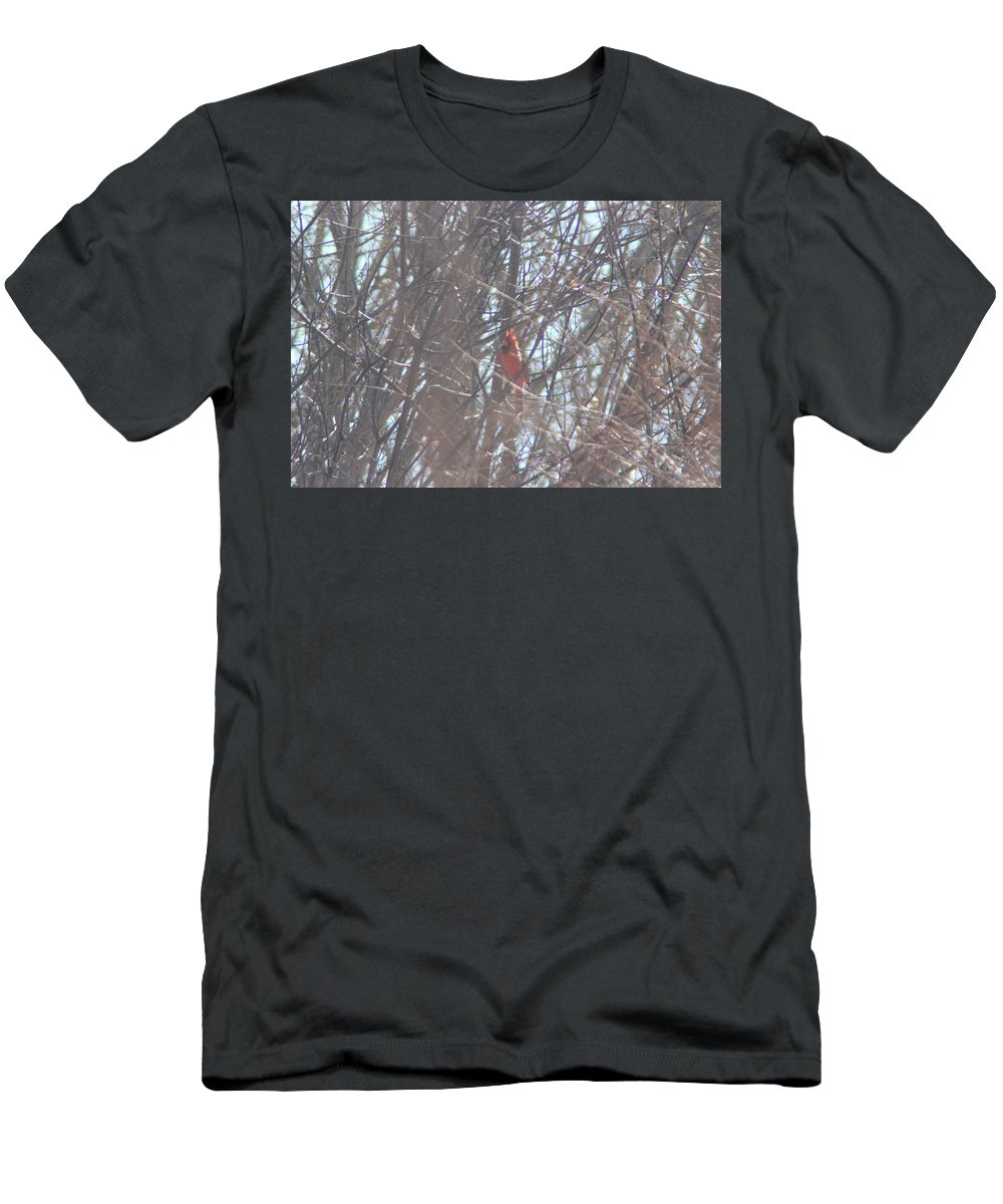 Snow Men's T-Shirt (Athletic Fit) featuring the photograph Cardinal Singing by Cliff Ball