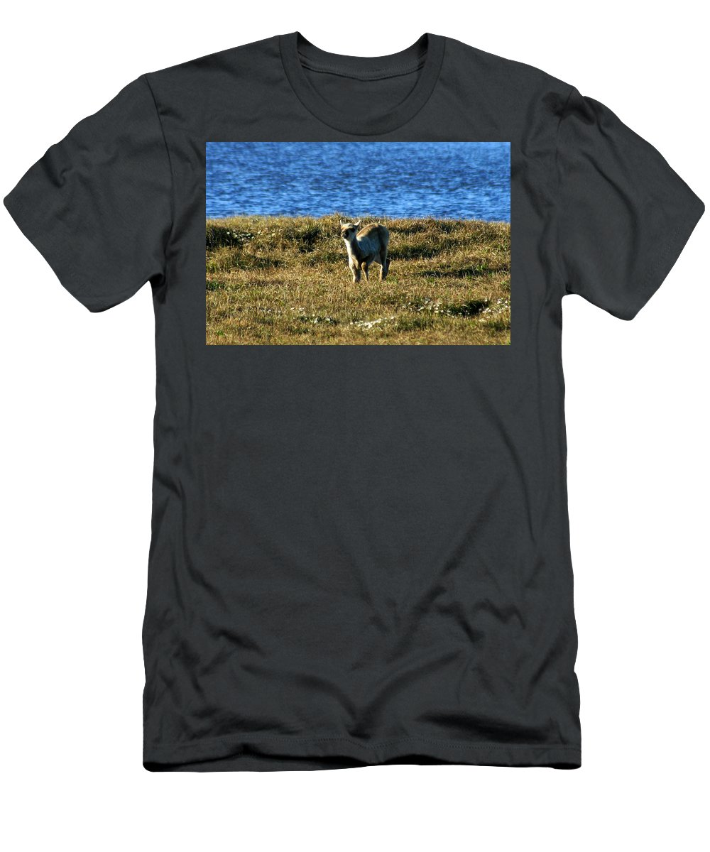 Fawn Men's T-Shirt (Athletic Fit) featuring the photograph Caribou Fawn by Anthony Jones