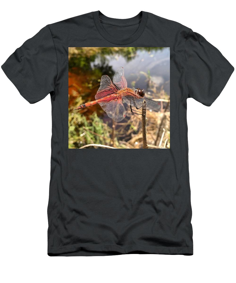 Dragonfly Nature Florida Landscape Insects Men's T-Shirt (Athletic Fit) featuring the photograph Carolina Saddlebag Dragonfly by Susan Seaver