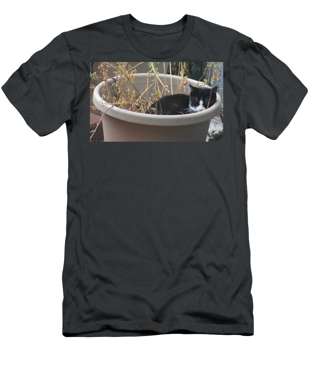 Cat Men's T-Shirt (Athletic Fit) featuring the photograph Cat In Flower Pot. by Cliff Ball