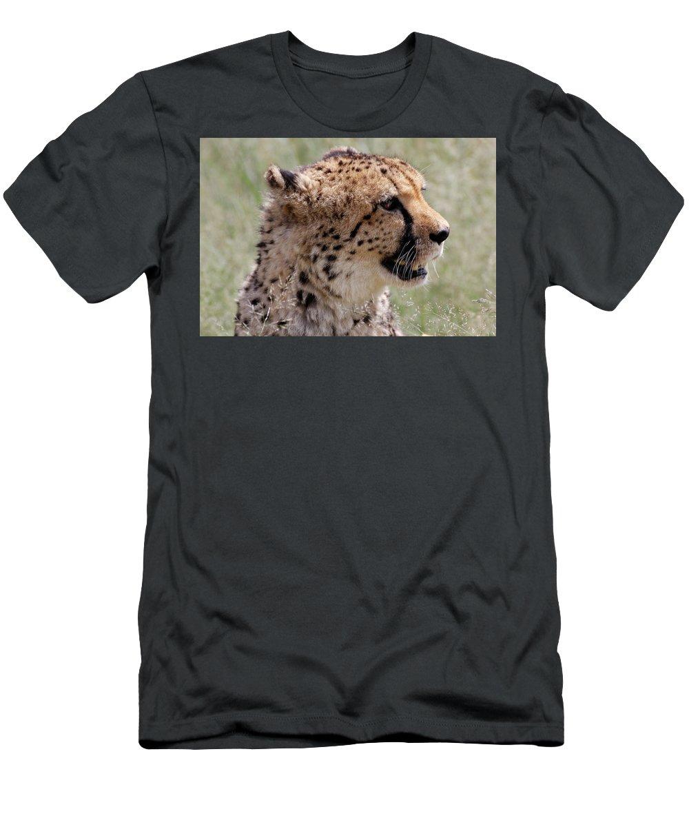 Cheetah Men's T-Shirt (Athletic Fit) featuring the painting Cheetah No. 2 by Robert SORENSEN