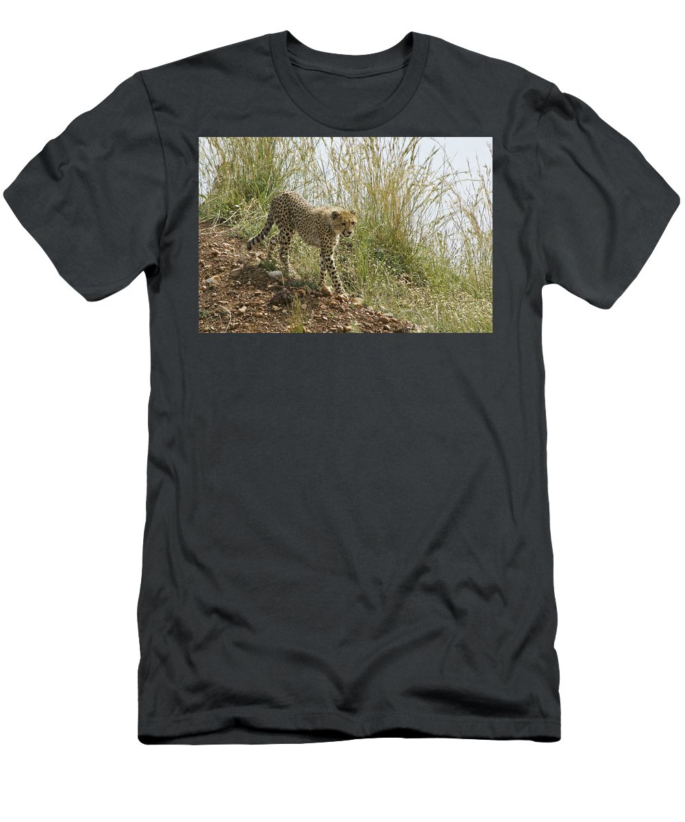 Africa Men's T-Shirt (Athletic Fit) featuring the photograph Cheetah Exploration by Michele Burgess