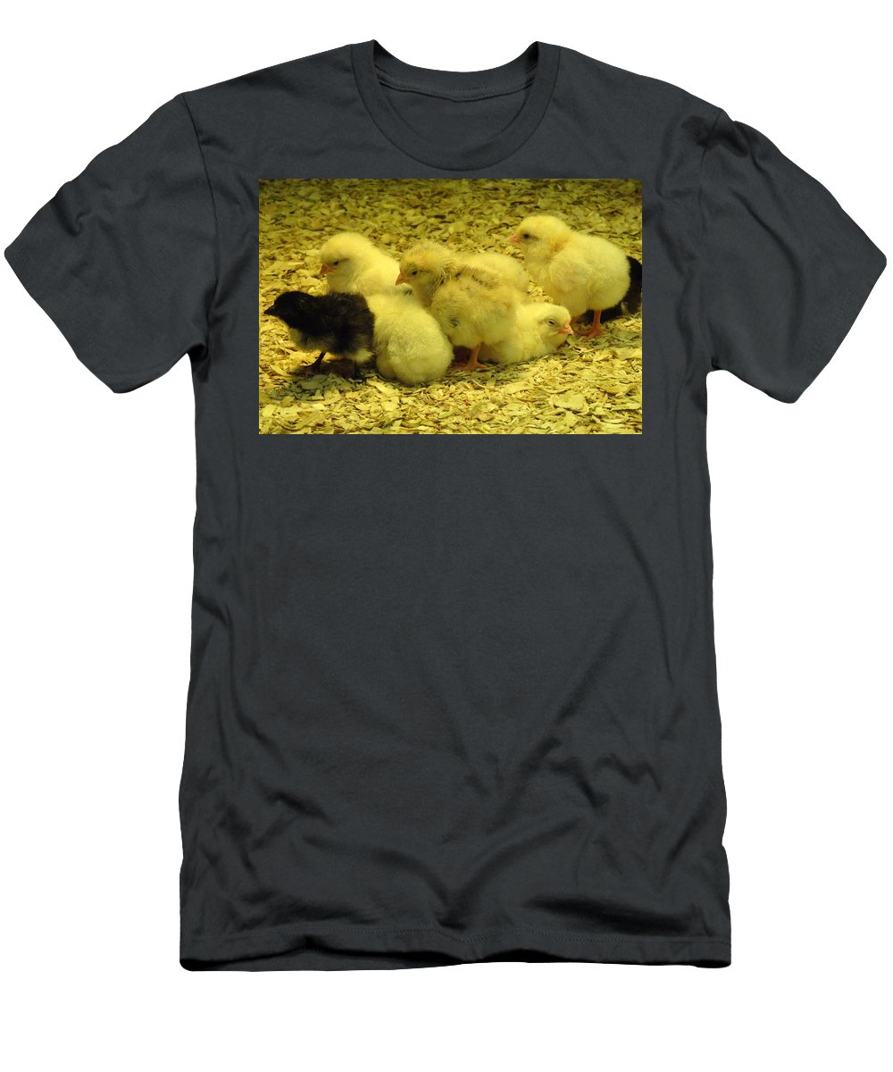 Baby T-Shirt featuring the photograph Chicks by Laurel Best