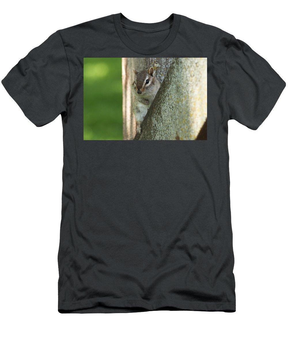 Chipmunk Men's T-Shirt (Athletic Fit) featuring the photograph Chipmunk by Lori Tordsen