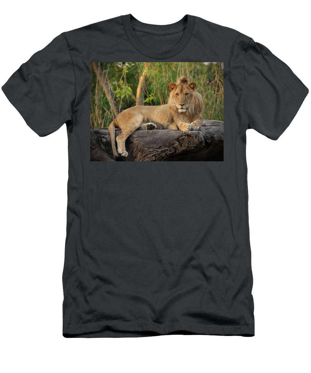 Lion T-Shirt featuring the photograph Classic Young Male by Steven Sparks