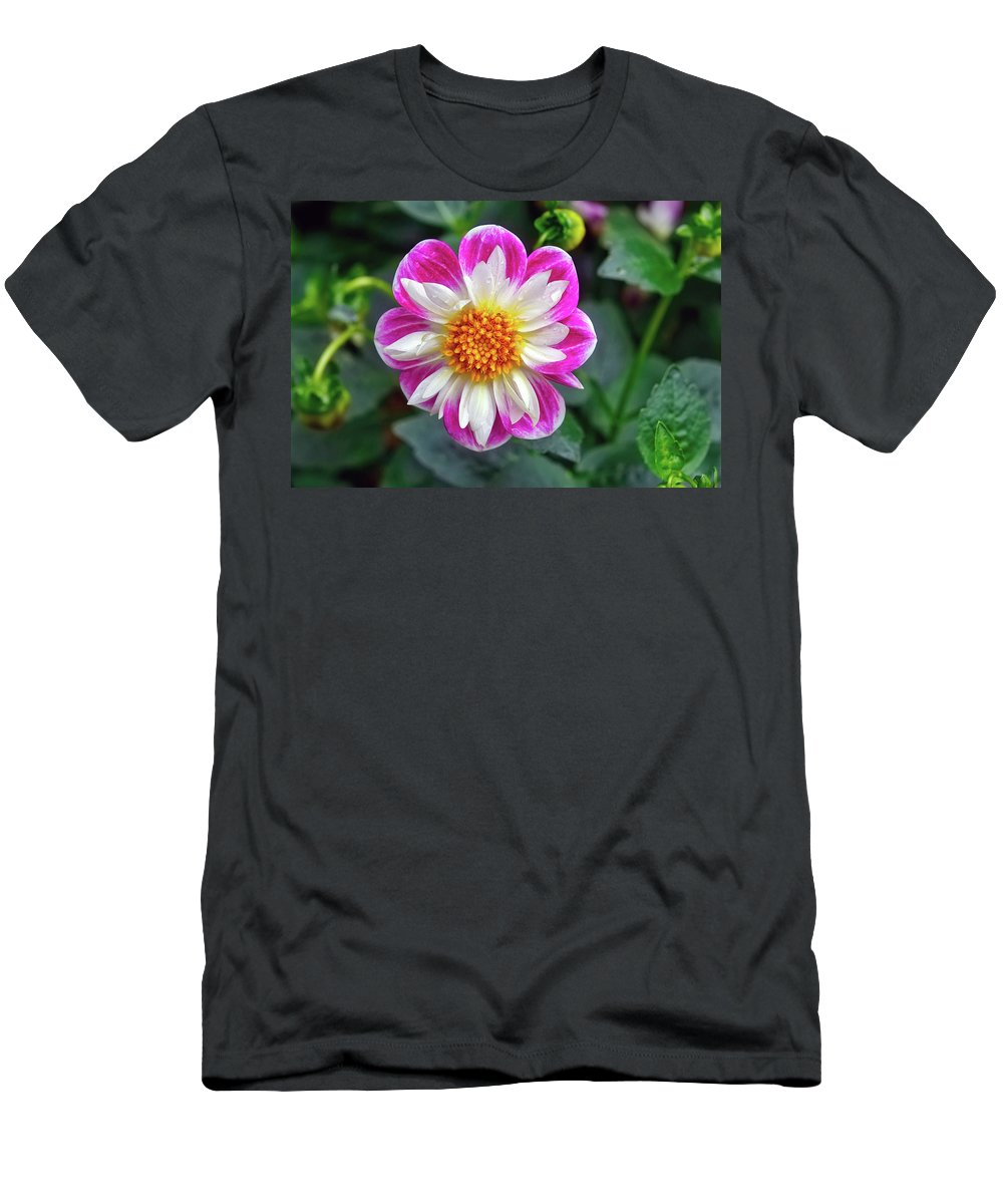 Dahlia Men's T-Shirt (Athletic Fit) featuring the photograph Closeup View Of A Dahlia That Was In The Cesky Krumlov Castle Gardens by Richard Rosenshein