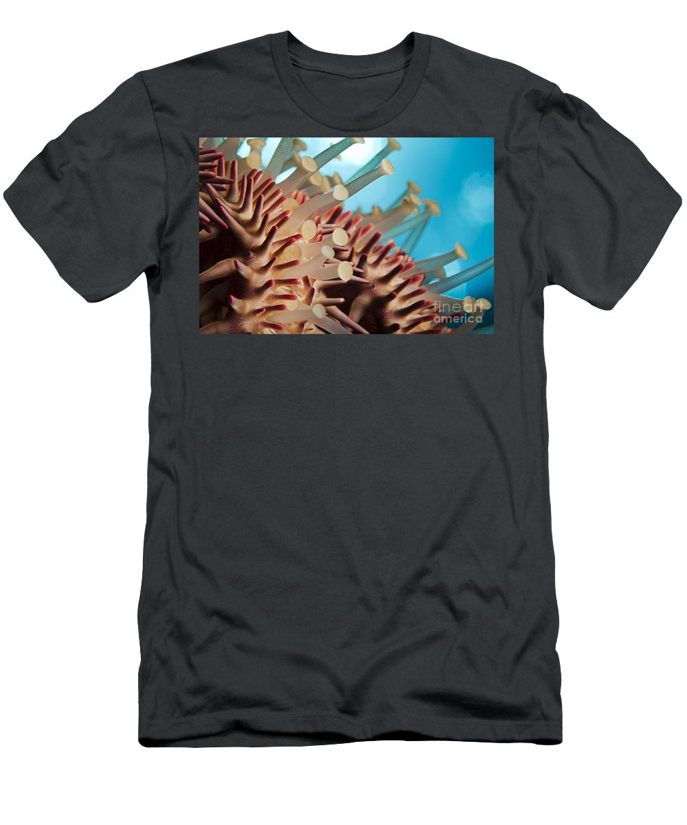 Abstract Art Men's T-Shirt (Athletic Fit) featuring the photograph Colorful Crown Of Thorns Starfish by Dave Fleetham - Printscapes