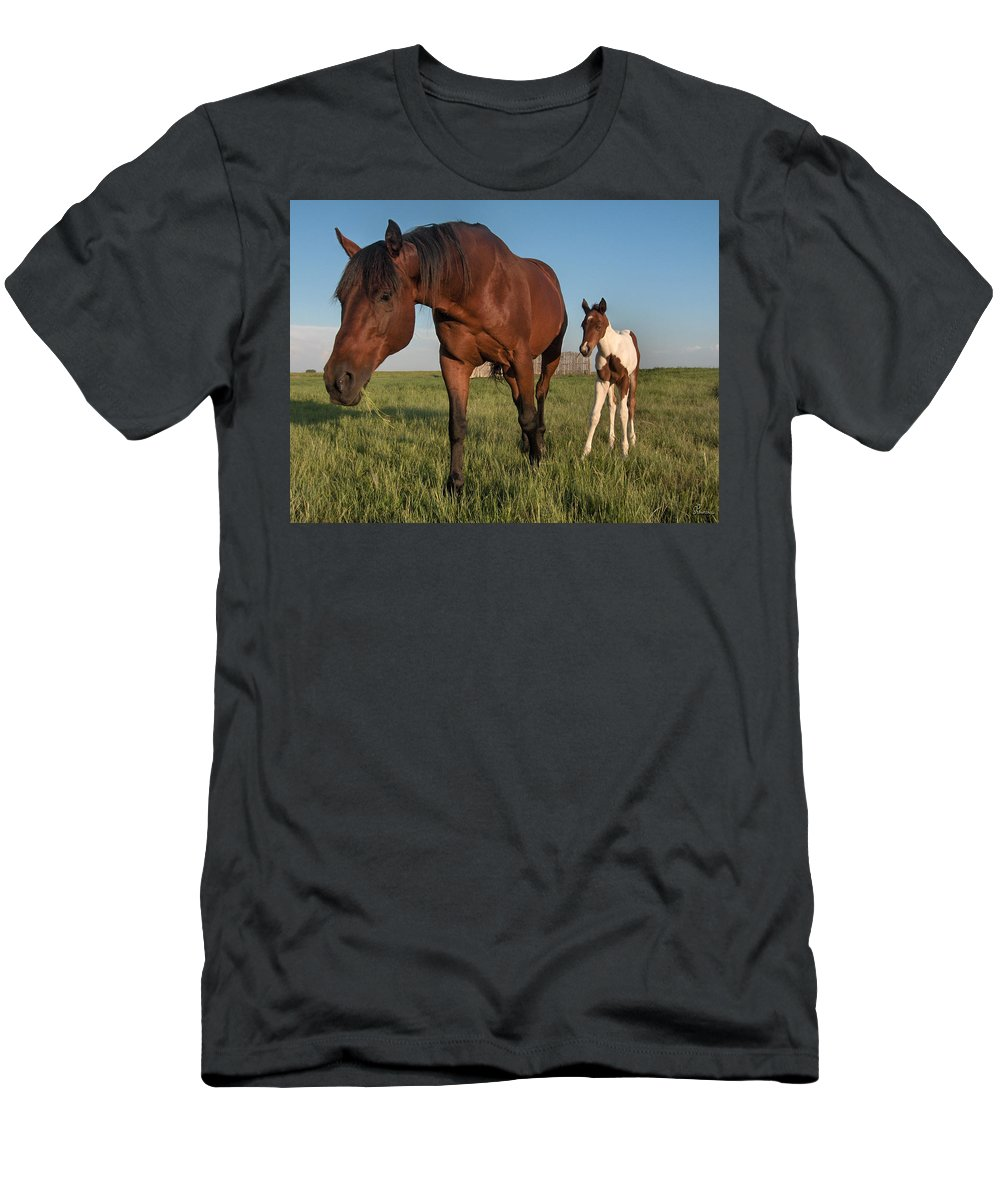 Horse Colt Baby Animals Herd Filly Ranch Farm Life Pasture Men's T-Shirt (Athletic Fit) featuring the photograph Contentment by Andrea Lawrence