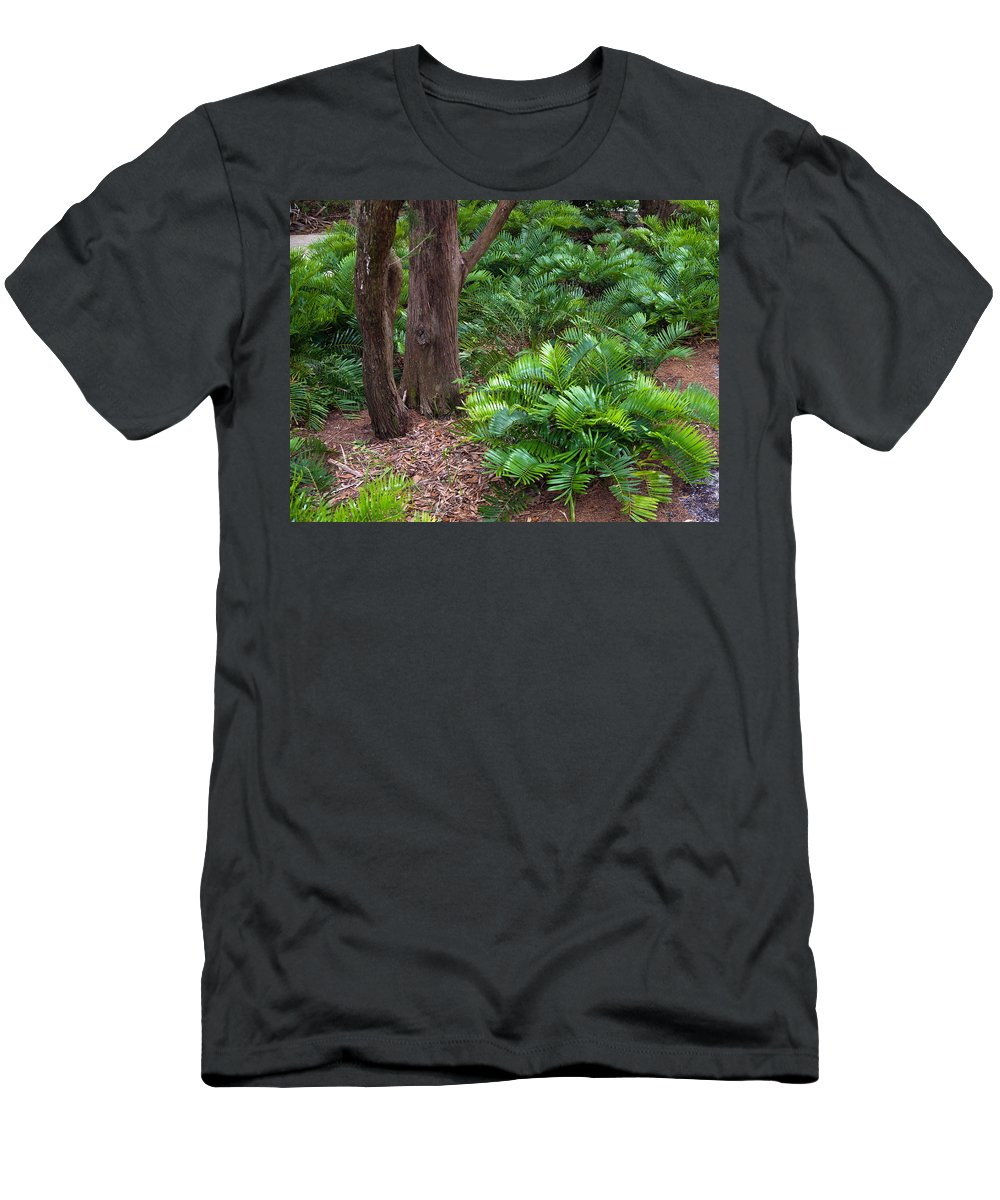 Florida; Coontie; Zamia; Integrifolia; Arrowroot; Indian; Bread; Breadroot; Plant; Rare; Wild; Prote Men's T-Shirt (Athletic Fit) featuring the photograph Coontie Florida Arrowroot Or Indian Breadroot by Allan Hughes