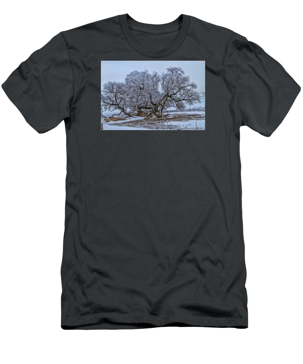 Cottonwood T-Shirt featuring the photograph Cottonwood Sprawl by Alana Thrower