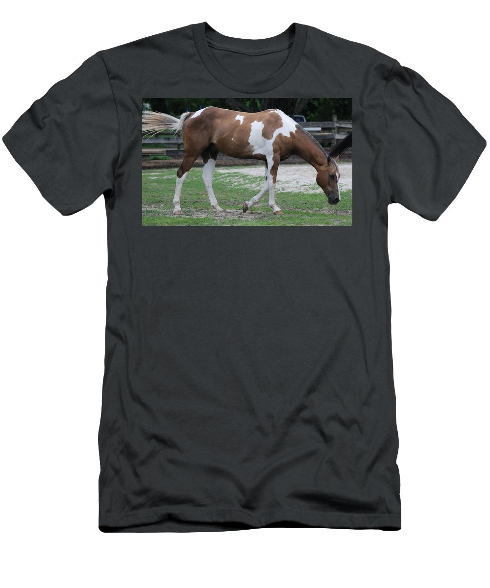 Horse Men's T-Shirt (Athletic Fit) featuring the photograph Cow Spotted Horse by Rob Hans