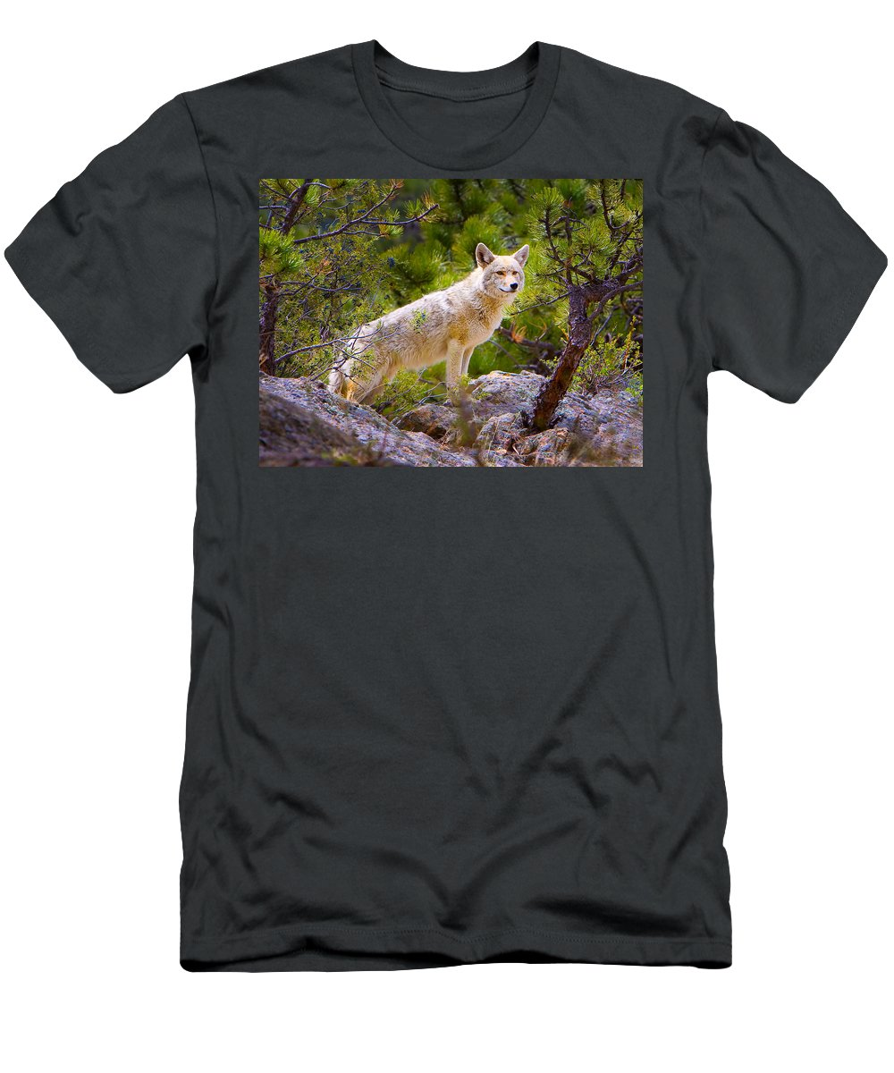 Wolf Men's T-Shirt (Athletic Fit) featuring the photograph Coyote In The Rocky Mountain National Park by James O Thompson