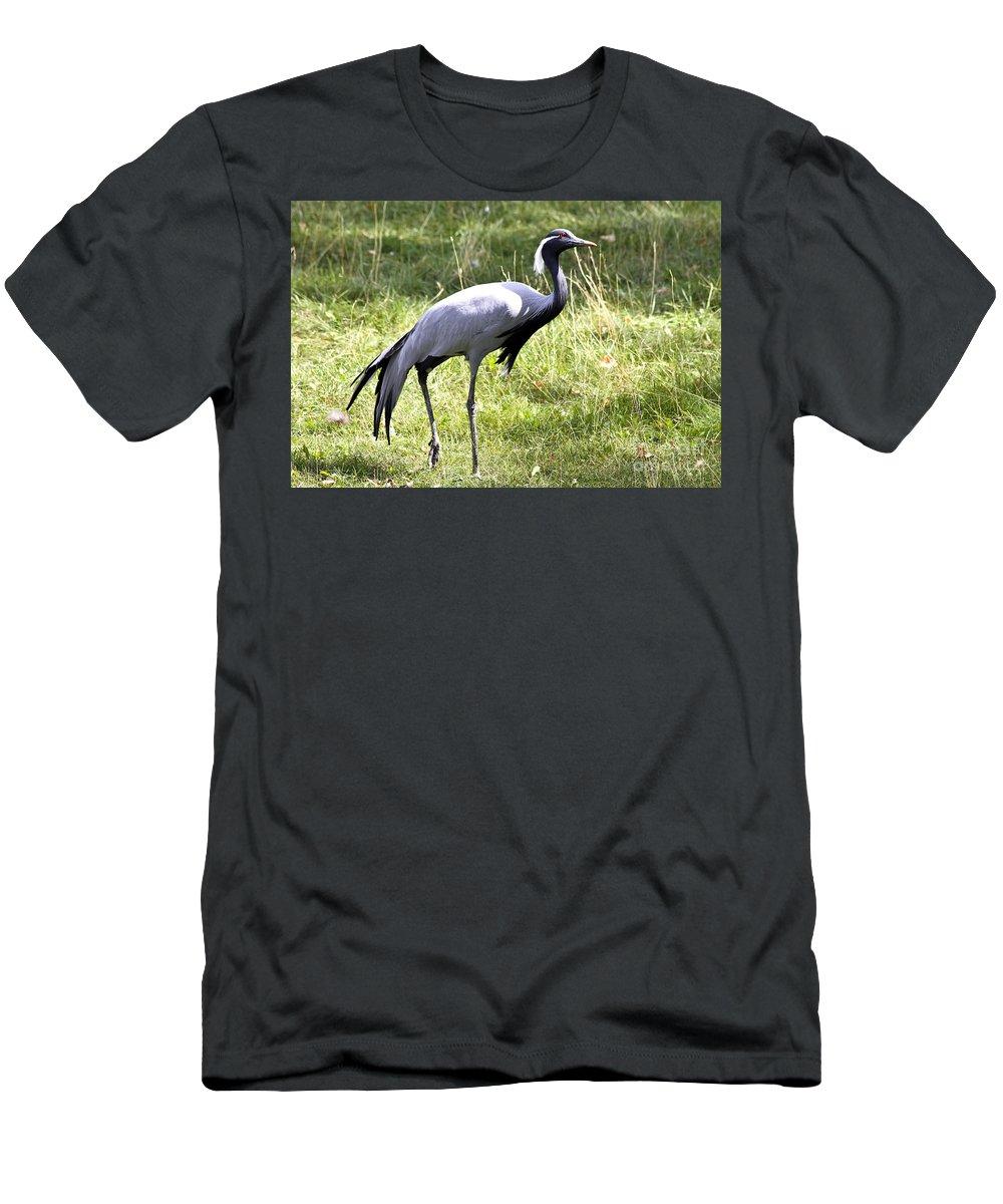 Bird Men's T-Shirt (Athletic Fit) featuring the photograph Demoiselle Crane by Teresa Zieba