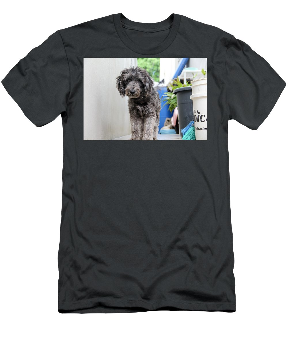 Animal Men's T-Shirt (Athletic Fit) featuring the photograph Dog by Eduardo Gil