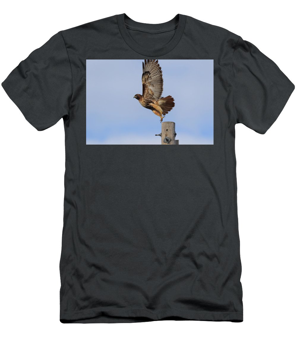 Accipitridae Men's T-Shirt (Athletic Fit) featuring the photograph Don't Look Down by The Bohemian Lens LLC