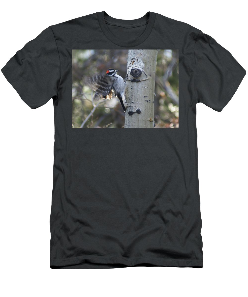 Woodpecker Men's T-Shirt (Athletic Fit) featuring the photograph Downy Woodpecker by Heather Coen