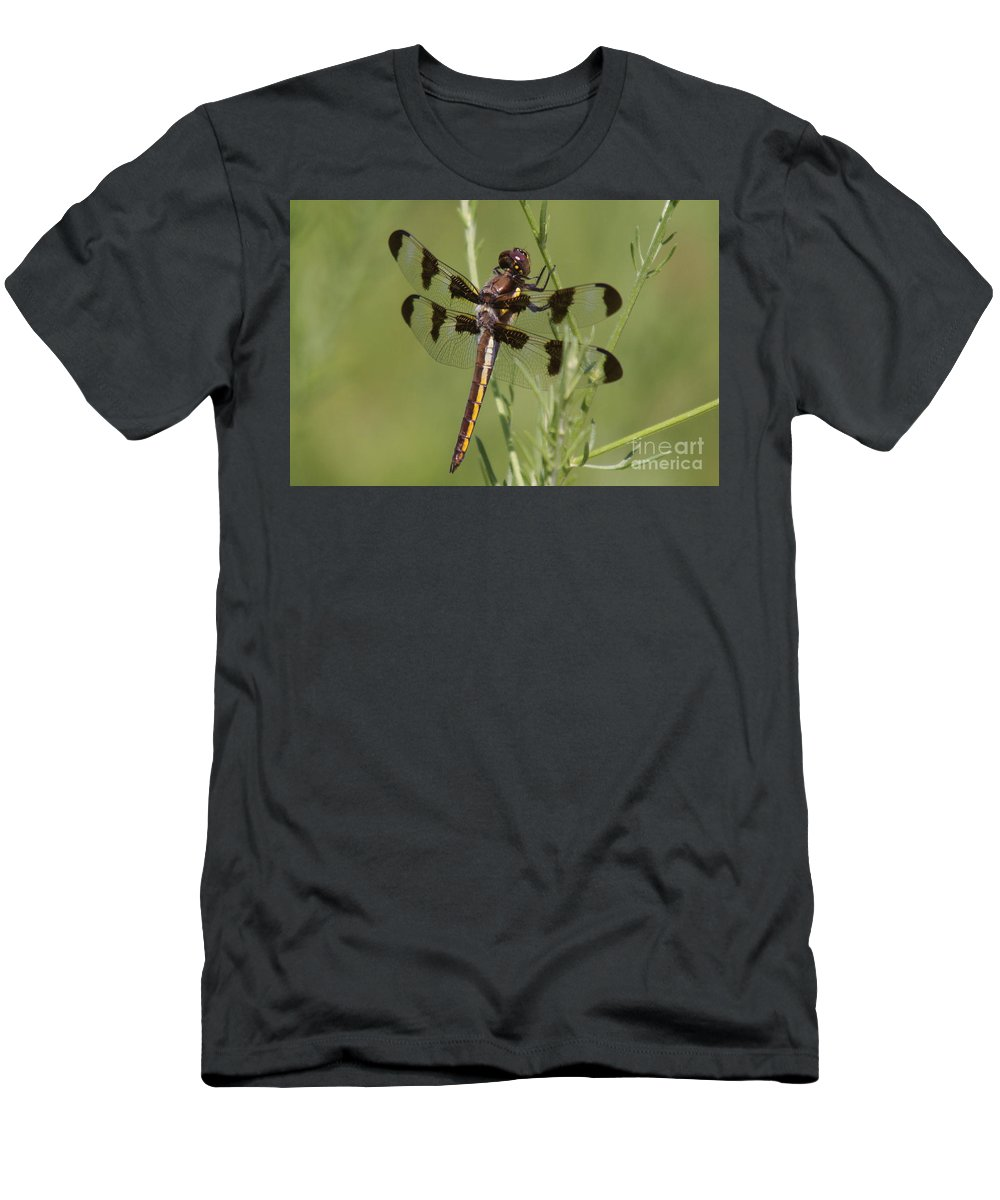 Insect Men's T-Shirt (Athletic Fit) featuring the photograph Dragon Fly by Robert Pearson