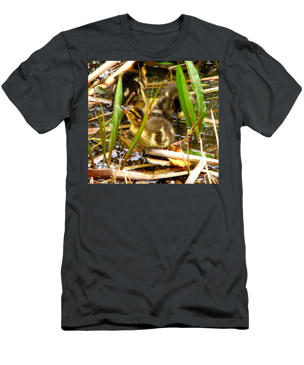 Duck Men's T-Shirt (Athletic Fit) featuring the photograph Ducklings 1 by J M Farris Photography