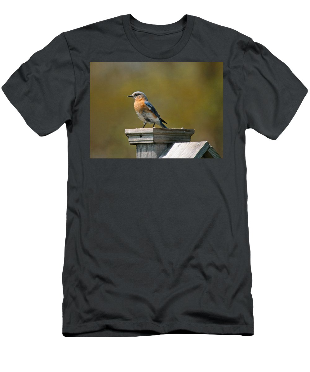 Blue Bird Men's T-Shirt (Athletic Fit) featuring the photograph Eastern Blue Bird by Robert Pearson