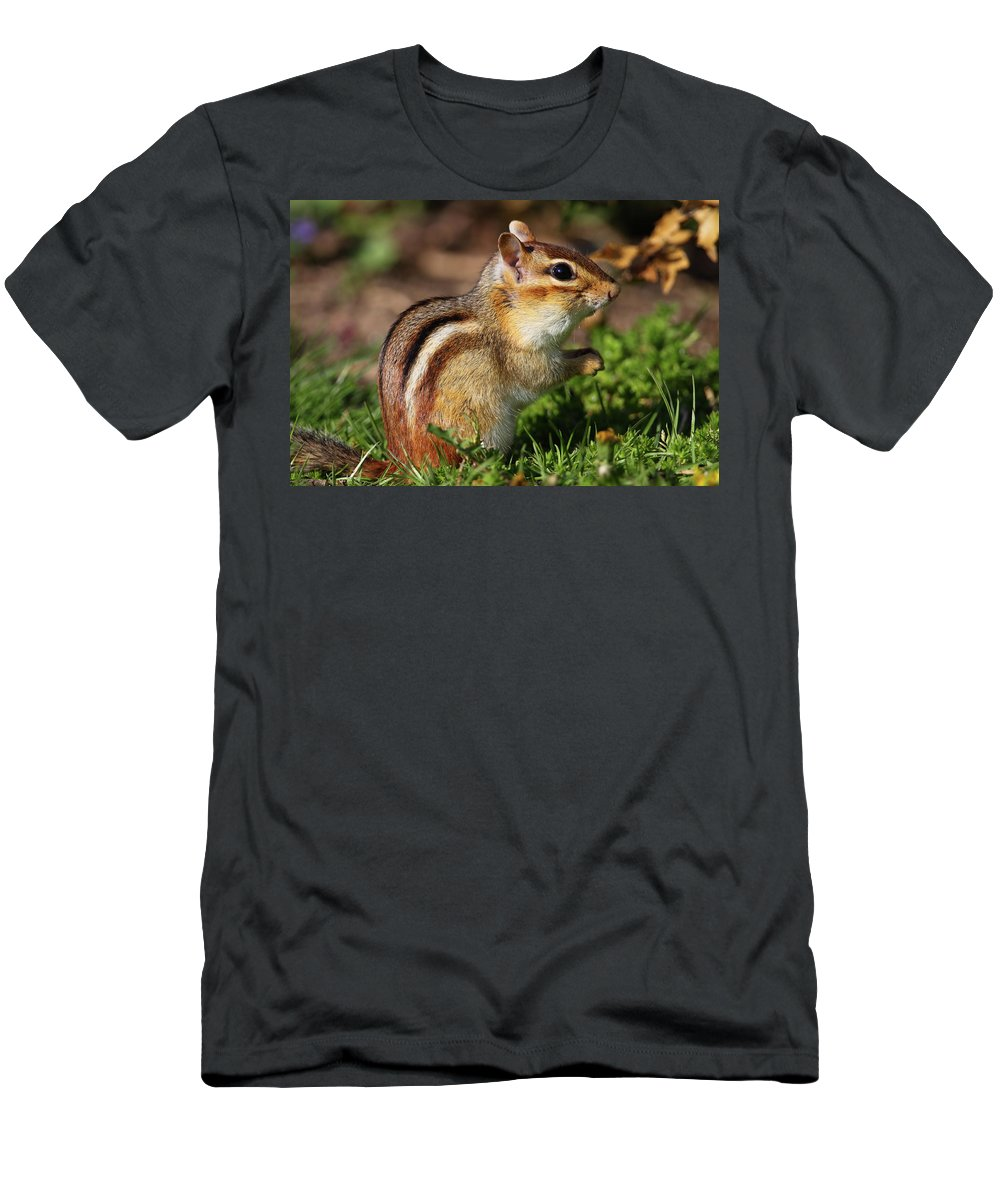 Chipmunk Men's T-Shirt (Athletic Fit) featuring the photograph Eastern Chipmunk by Bruce J Robinson