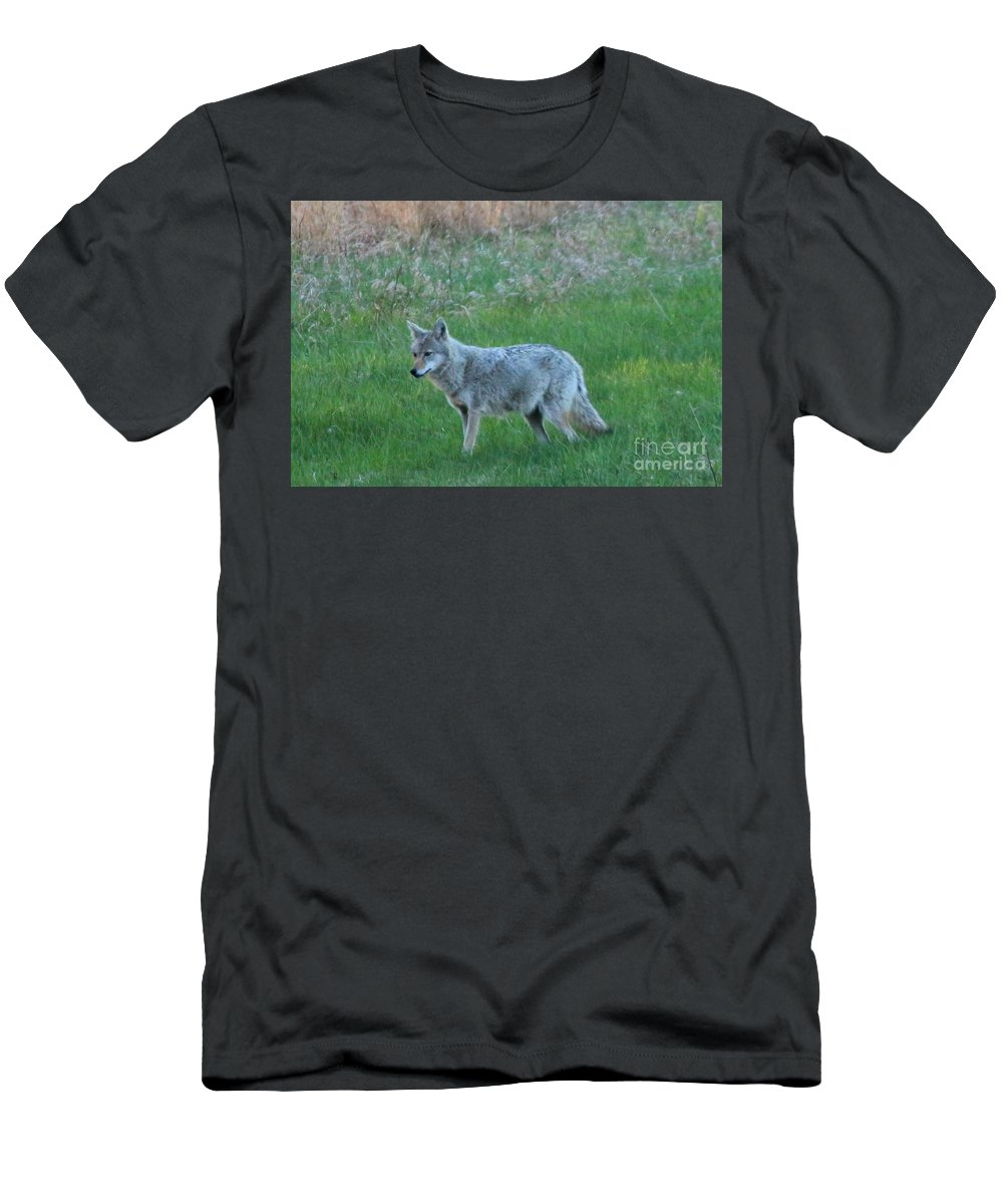 Coyote Men's T-Shirt (Athletic Fit) featuring the photograph Eastern Coyote In Meadow  by Neal Eslinger