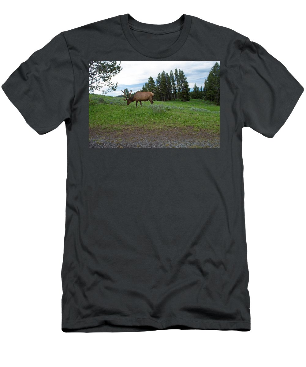 Elk Men's T-Shirt (Athletic Fit) featuring the photograph Elk Feeding by Linda Kerkau