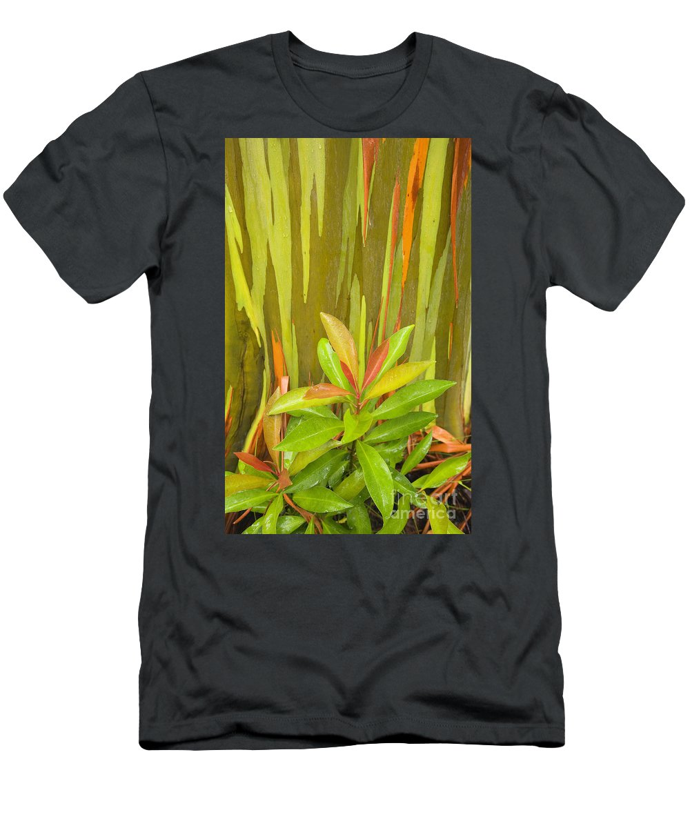 Background Men's T-Shirt (Athletic Fit) featuring the photograph Eucalyptus And Leaves by Ron Dahlquist - Printscapes