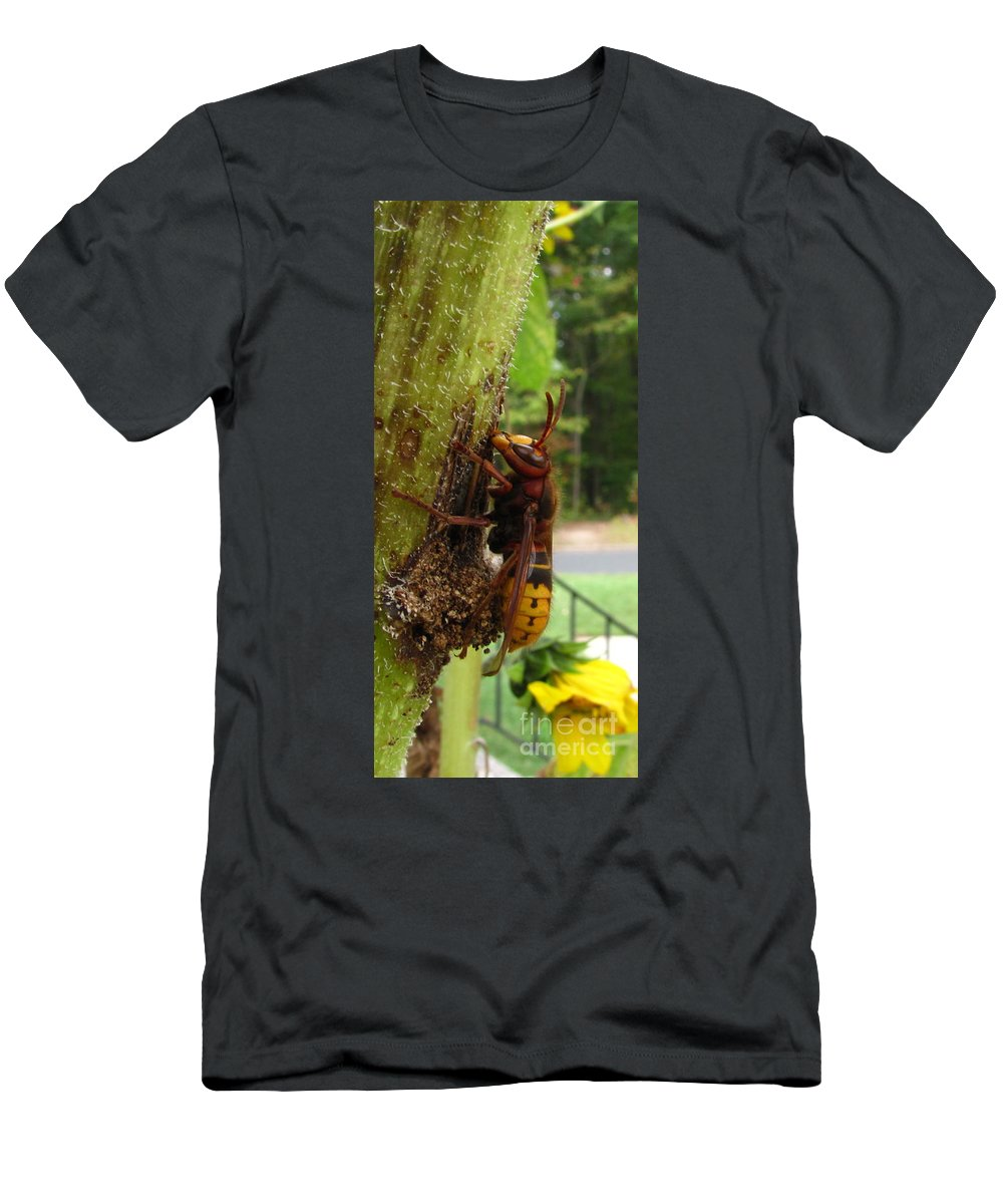 European Hornet Men's T-Shirt (Athletic Fit) featuring the photograph European Hornet by Joshua Bales