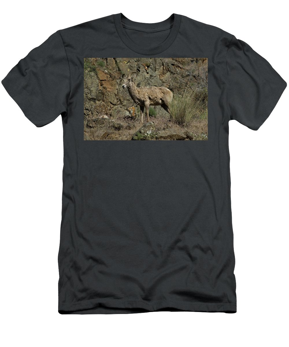 Sheep Men's T-Shirt (Athletic Fit) featuring the photograph Ewe 2 by Sara Stevenson