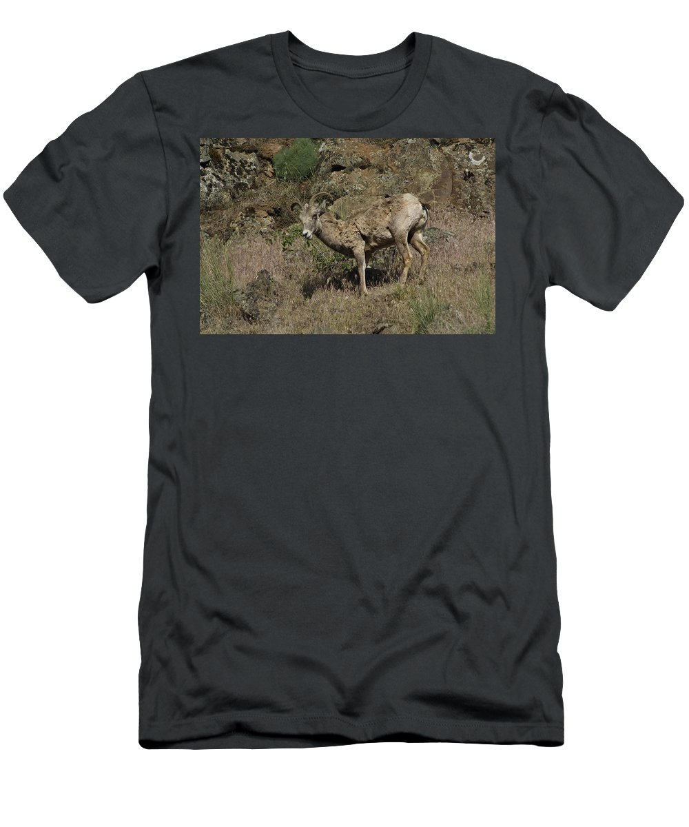 Goat Men's T-Shirt (Athletic Fit) featuring the photograph Ewe 5 by Sara Stevenson