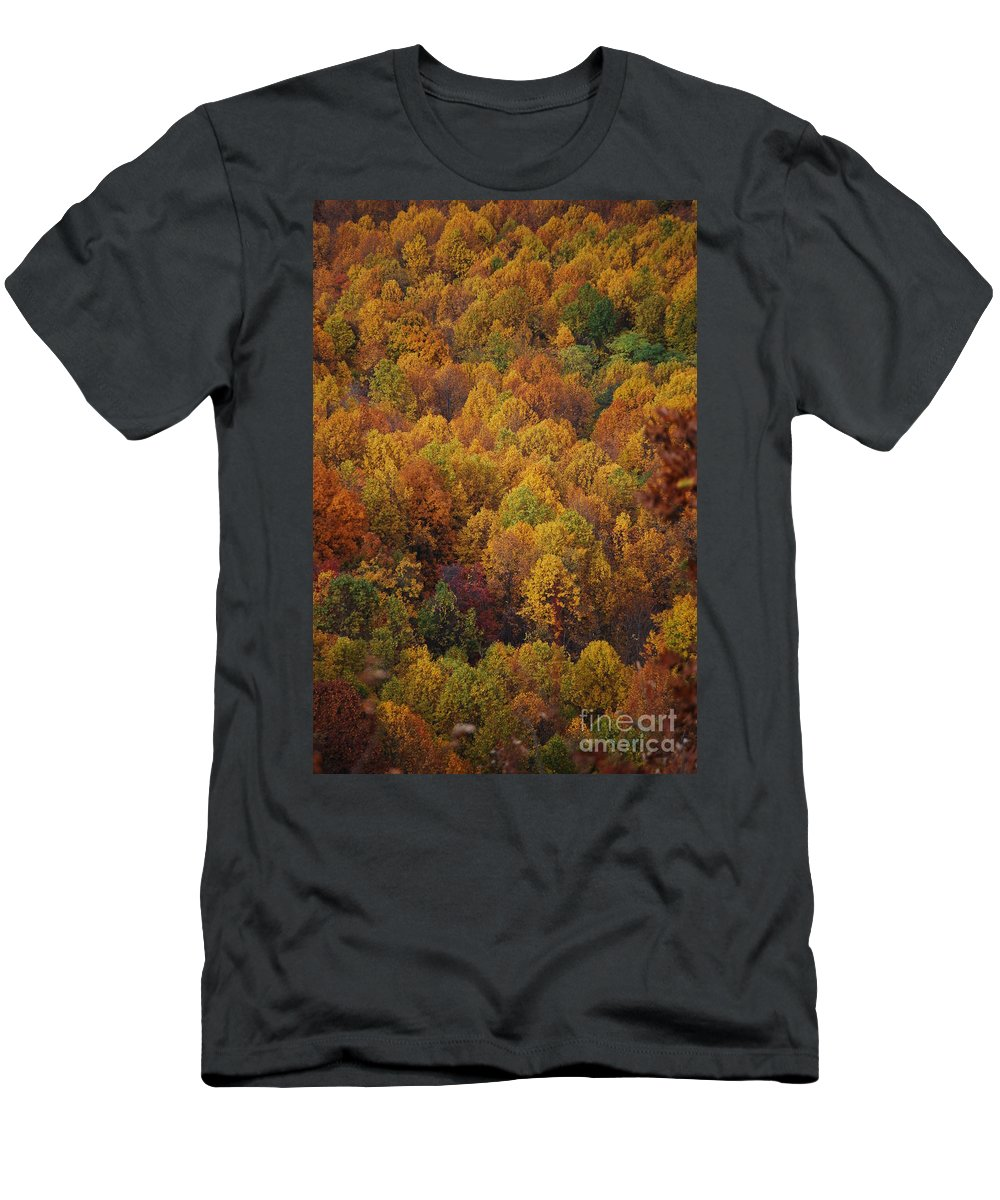 Fall T-Shirt featuring the photograph Fall Cluster by Eric Liller
