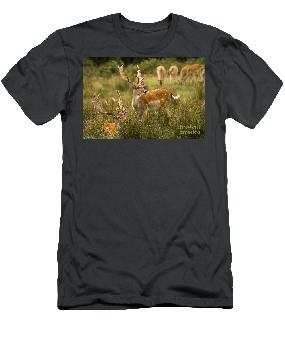 Fallow Deer Men's T-Shirt (Athletic Fit) featuring the photograph Fallow Deer by Angel Ciesniarska