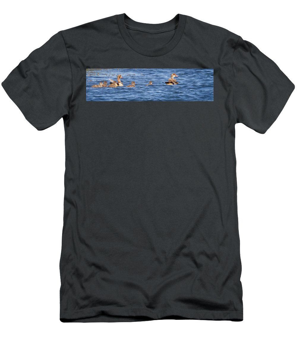 Gariep Men's T-Shirt (Athletic Fit) featuring the photograph Family Geese by Melanie Meyer