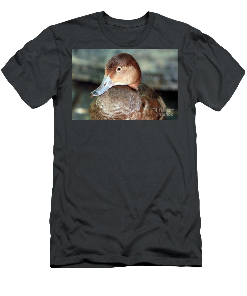Duck Men's T-Shirt (Athletic Fit) featuring the photograph Female Redhead Duck by Randy Matthews