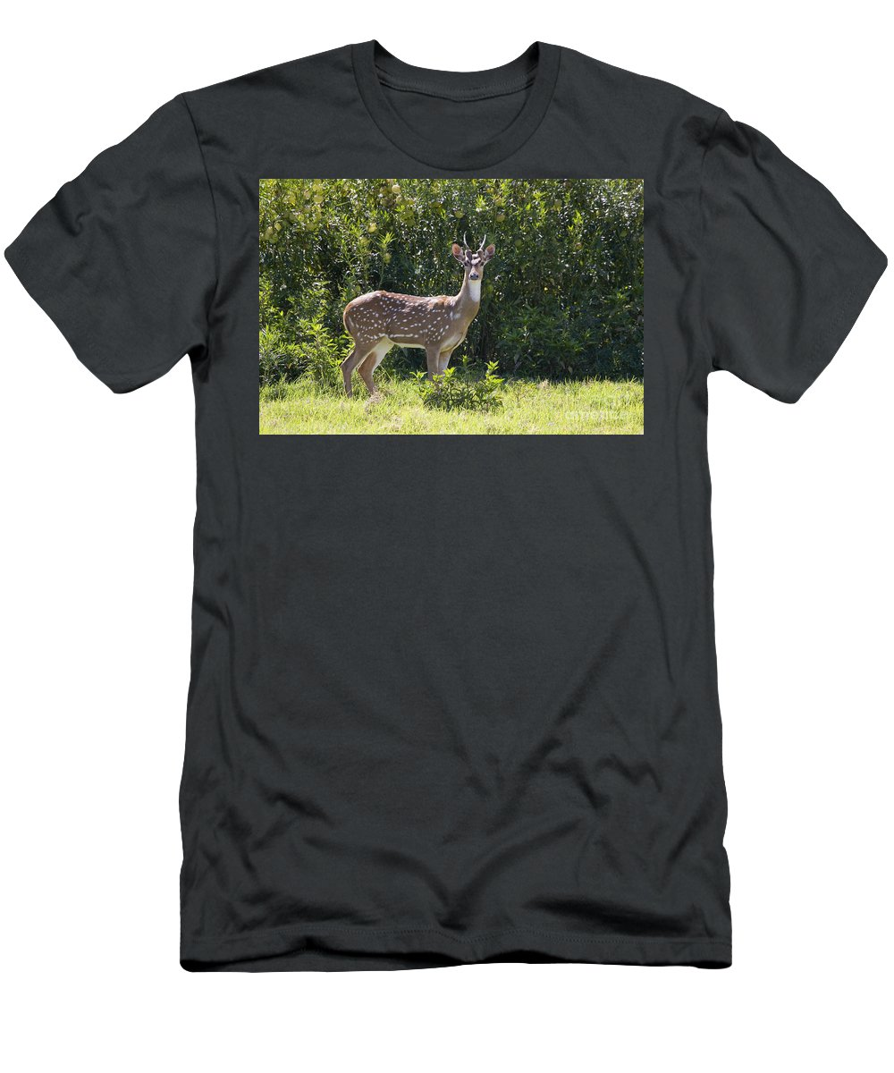 Alert Men's T-Shirt (Athletic Fit) featuring the photograph Feral Axis Deer by Dave Fleetham - Printscapes