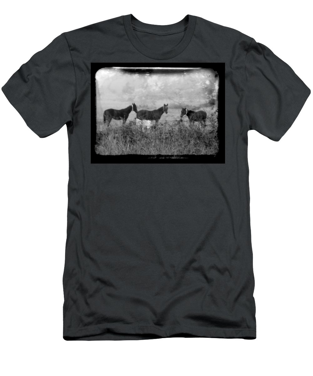 Horses Men's T-Shirt (Athletic Fit) featuring the photograph Horse Trio In Morning Fog by Toni Hopper