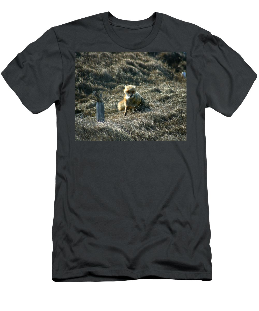 Red Fox Men's T-Shirt (Athletic Fit) featuring the photograph Fox In The Wind by Anthony Jones