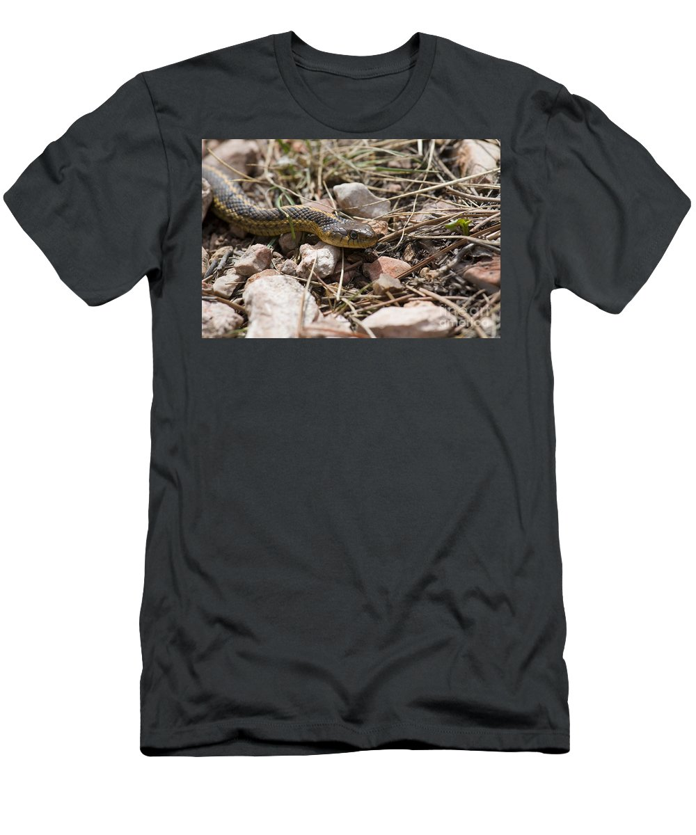 Beautiful Men's T-Shirt (Athletic Fit) featuring the photograph Garter Snake On The Trail In The Pike National Forest Of Colorad by Steve Krull