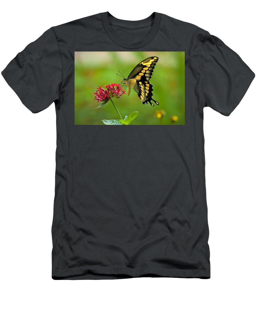 Giant Swallowtail Men's T-Shirt (Athletic Fit) featuring the photograph Giant Swallowtail Butterfly by Rich Leighton