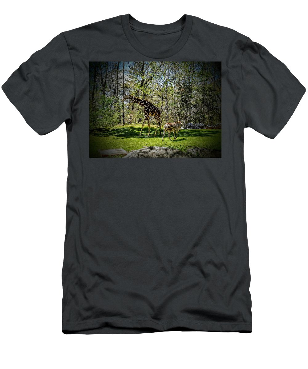 Africa Men's T-Shirt (Athletic Fit) featuring the photograph Giraffe And Zebra by Codi Gadd