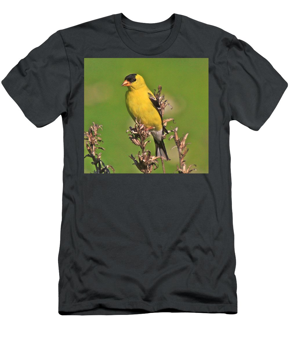Related Tags: Men's T-Shirt (Athletic Fit) featuring the photograph Gold Finches-6 by Robert Pearson