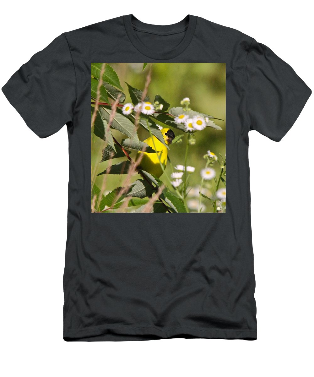 Related Tags: Men's T-Shirt (Athletic Fit) featuring the photograph Gold Finches-7 by Robert Pearson