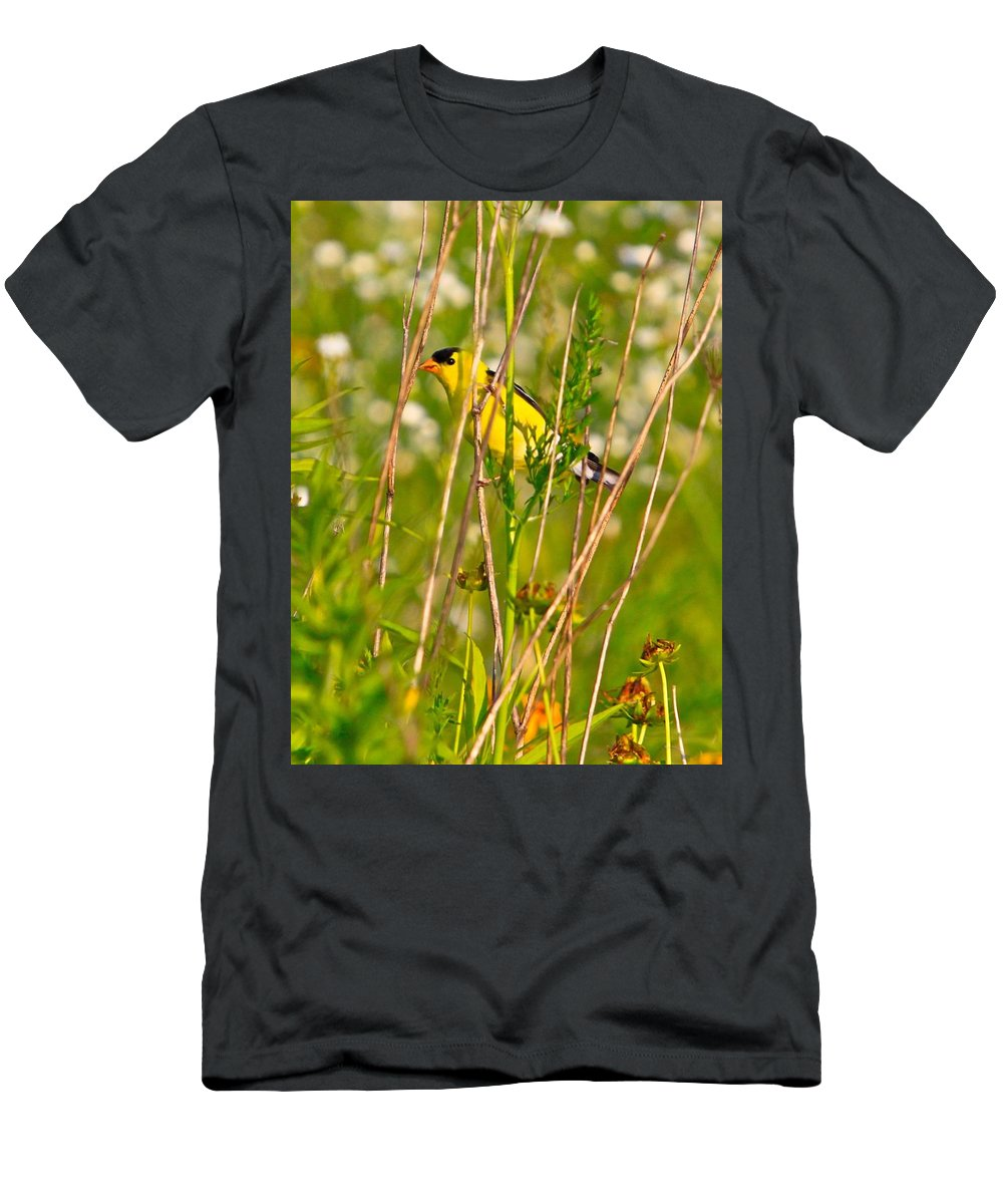 Bird Men's T-Shirt (Athletic Fit) featuring the photograph Gold Finches-8 by Robert Pearson