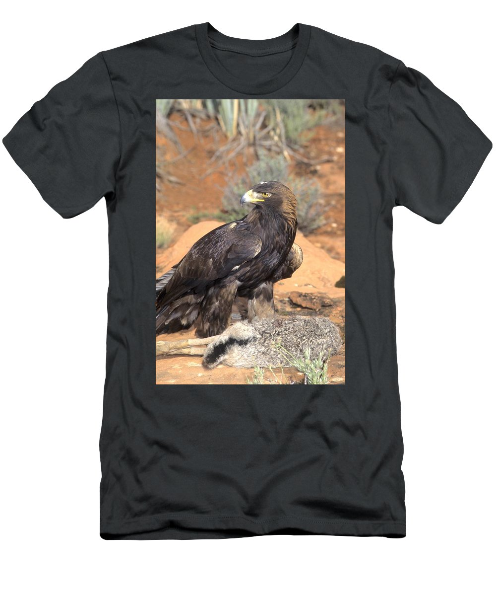 Wildlife Men's T-Shirt (Athletic Fit) featuring the photograph Golden Eagle On Rabbit by Larry Allan