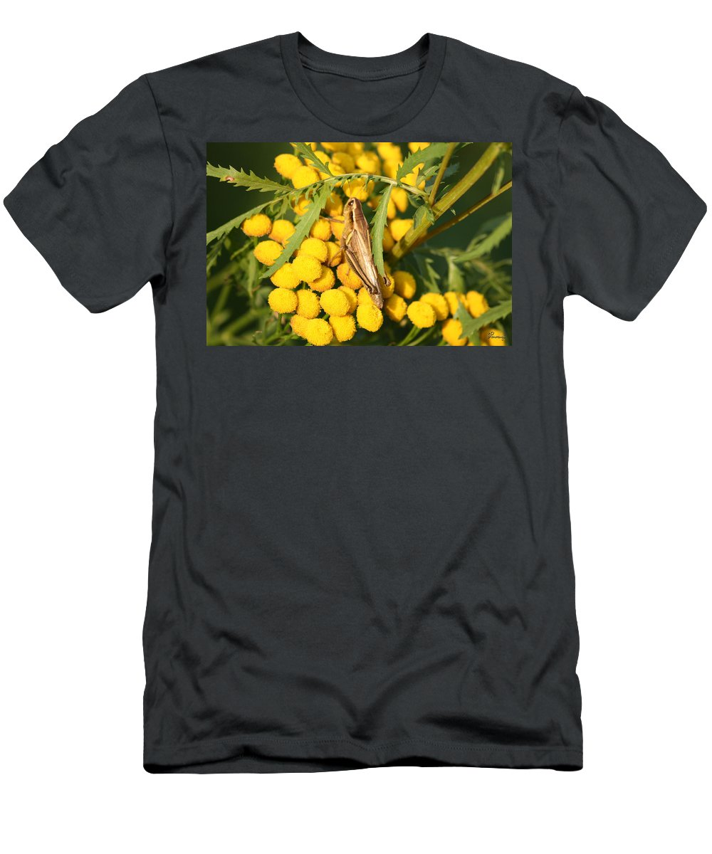 Bug Grasshopper Plants Flowers Nature Yellow Wild Life Green Weed Men's T-Shirt (Athletic Fit) featuring the photograph Grasshopper by Andrea Lawrence