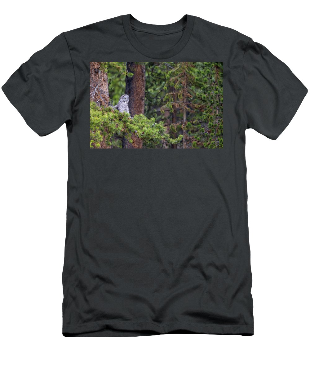 Great Gray Owl Men's T-Shirt (Athletic Fit) featuring the photograph Great Gray Owl Perched by Max Waugh