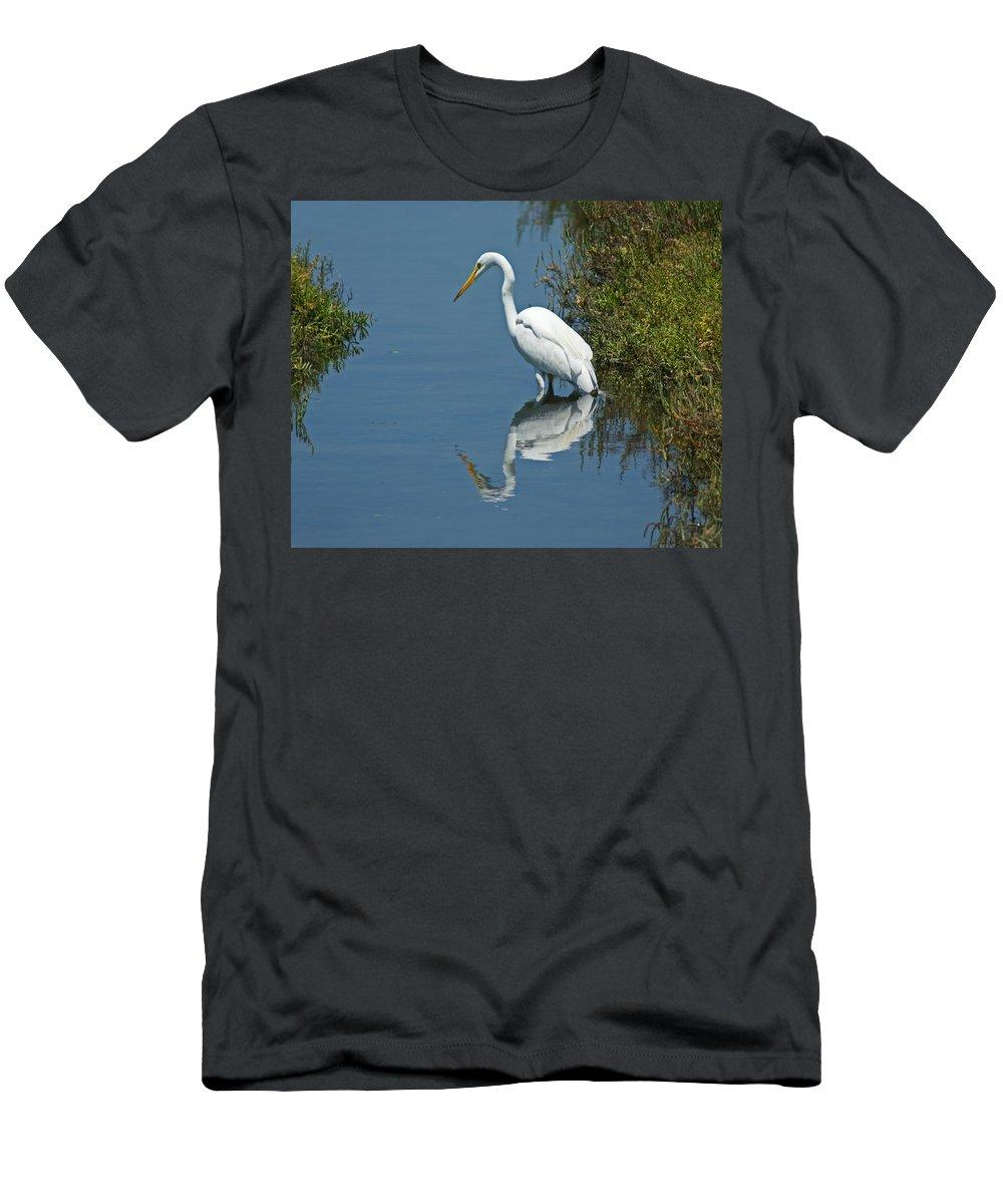 Birds Men's T-Shirt (Athletic Fit) featuring the photograph Great White Egret by Ernie Echols