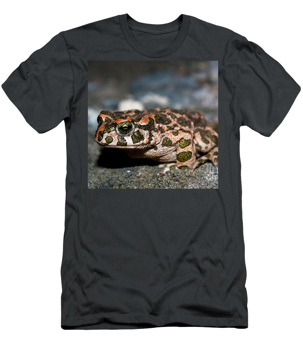 Bufo Viridis Men's T-Shirt (Athletic Fit) featuring the photograph Green Toad by Kamen Ruskov