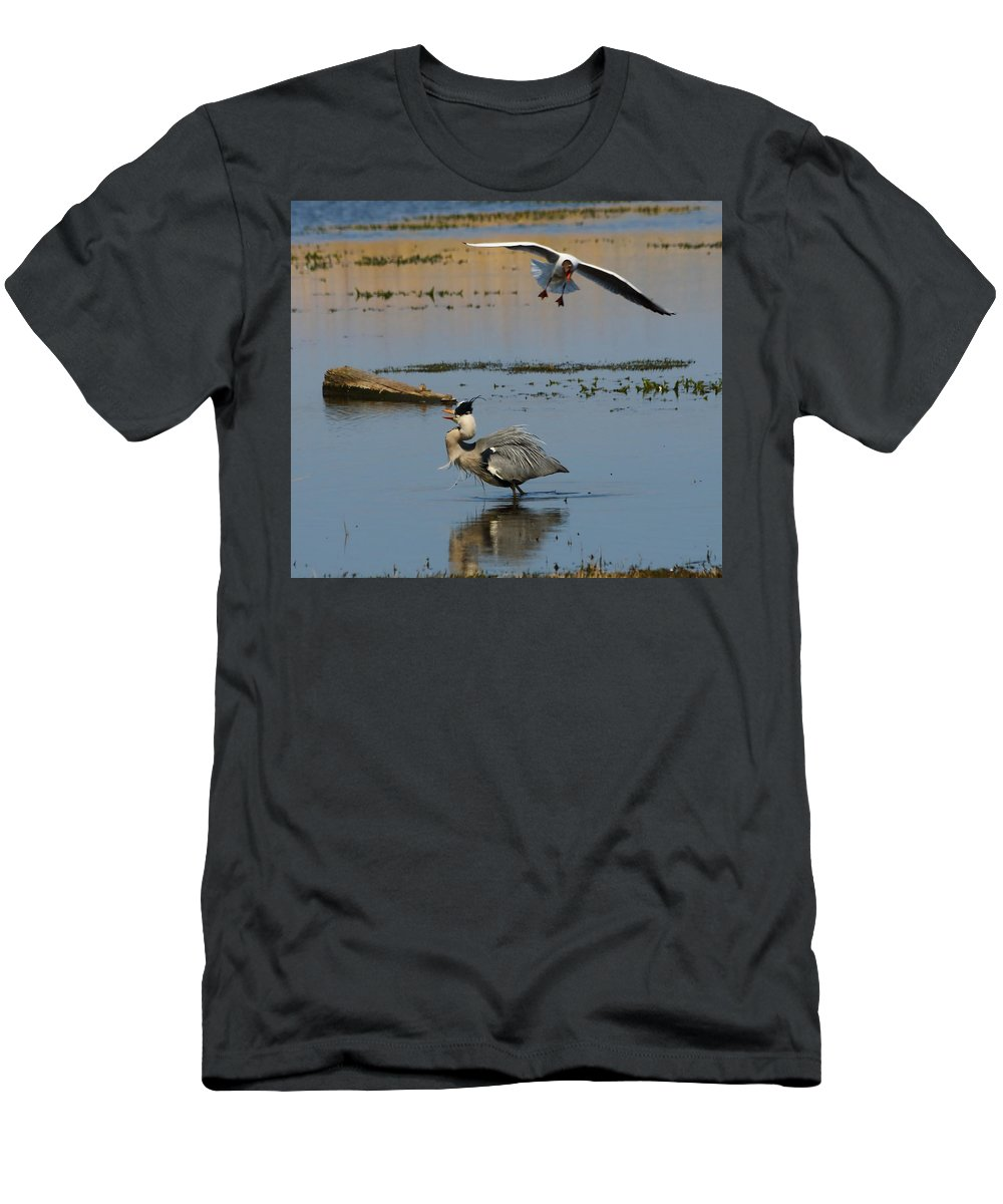 Birds Bird Grey Heron Black Headed Gull Nature Wildlife Lake Water Reserve Mobbing Ornithology Webbed Feet Red Bill Grey White Black Men's T-Shirt (Athletic Fit) featuring the photograph Grey Heron Being Mobbed by Jeff Townsend